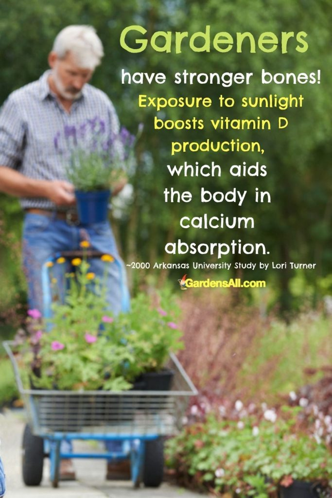 Gardeners have stronger bones! Exposure to sunlight boosts vitamin D production, which aids the body in calcium absorption. ~2000 Arkansas University Study by Lori Turner GardensAll.com