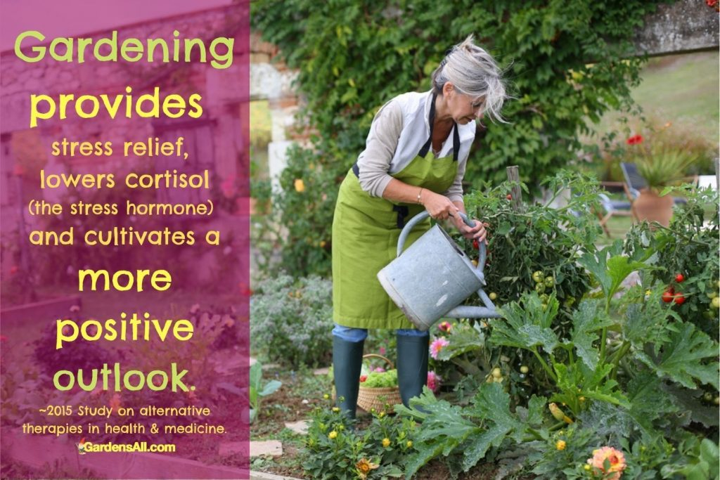 Gardening provides stress relief, lowers cortisol (stress hormone) and cultivates a more positive outlook.~2015 Study on alternative therapies in health and medicine. GardensAll.com