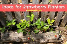 Hollow log planters - Ideas for Strawberry Planters - GardensAll.com